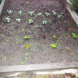 Winter veggie patch