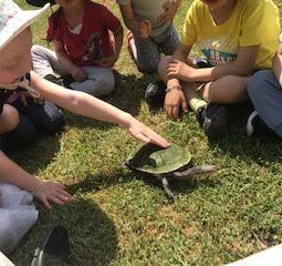 turtle 2019