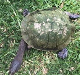 Turtle only 2020