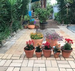 Flower Pots on left after opening the gate