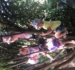 Tree Play Group 2020